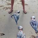 Octopus Sagres Beach